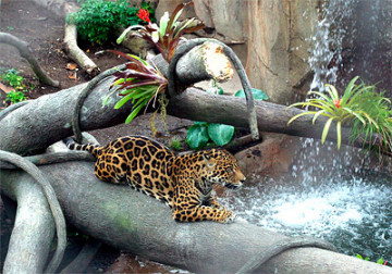 2004_Jaguar Exhibit.jpg